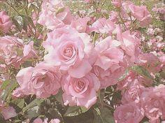 Imagem de pink flowers and rose p i n k pinterest pink gabytaangeles g mightylinksfo