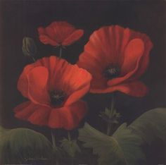 Vibrant Red Poppies I