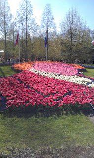 full of flowers Flowers, Plants, Flora, Plant, Royal Icing Flowers, Flower, Florals, Bloemen, Planting