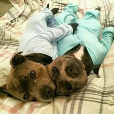 Phillip and Darren. The Blue Boys! <3 <3 They love wearing onesies and cuddling.