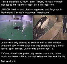Junior. His story is heartbreaking ;(