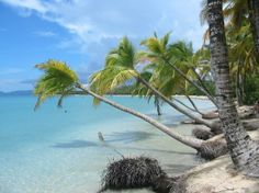 beautiful palm trees hanging over the water, at Les Salines Beach, Martinique #AccorVacation