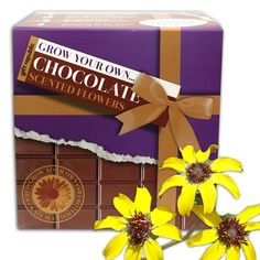 Grow Your Own Chocolate Scented Flowers Kit