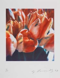 Cy Twombly, Tulips III no. 2, negative 1985; print 1993. Color dry ink print