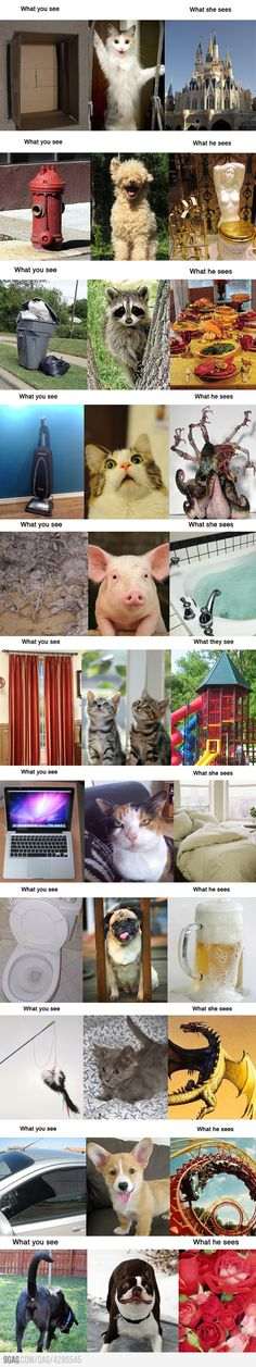 What You See vs. What Animals See    Has anyone else noticed all the cats are referred to as being of female gender and all the dogs are assumed to be male? Does this bother anyone else? Just slightly...??