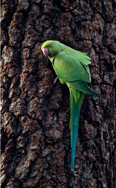 Birdie :)