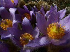 MUZIKOLAMY - Na vodách květy zavřely se k spánku