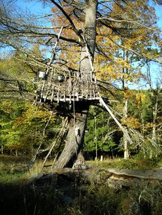 heck... it's a TREEhouse