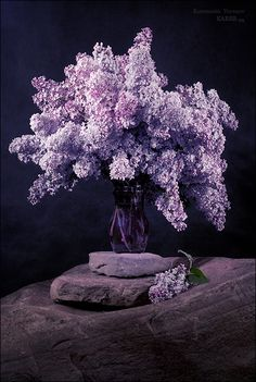 Lilacs make me think of spring - It hasn't begun till they've begun to bloom and every breath I take is filled with their amazing scent. <3