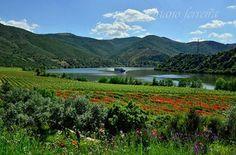 Bonita paisagem do Alto Douro Douro, Vineyard, Portugal, Mountains, Nature, Travel, Outdoor, Paisajes, Pretty