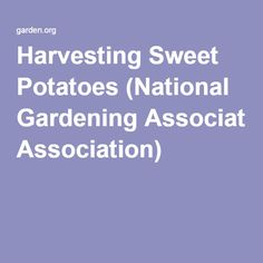 The Q&A Archives: Irish Moss Indoors (National Gardening Association) Growing Flowers, Cut Flowers, Farming, Watering Tomatoes, Growing Sweet Potatoes, Tomato Seedlings, Irish Moss, Cut Flower Garden, Growing Tomatoes