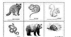 Hibernation Station Animals.pdf Animals That Hibernate, Listening Ears, K 1, Home Schooling, After School, Seasons, School Ideas, Schedule, Bears