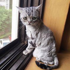 何があったの?いつ見ても悲しそうな顔のニャンコが可愛いww - IRORIO(イロリオ)