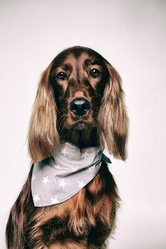 Featured photo by Kamila Orzech. Check out Kamila's profile: https://www.pexels.com/u/kamila-orzech-248783/ #woman #animal #dog