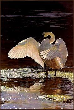 'Into The Light - Trumpeter Swan' acrylic painting by Terry Isaac by Plum…
