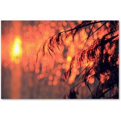 Trademark Fine Art Sunset Wishes Canvas Art by Beata Czyzowska Young, Size: 12 x 19, Multicolor