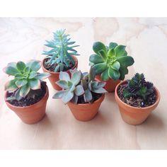 Succulents Planter Ideas, Planter Pots, Vivarium, Urban Gardening, Succulents, Beautiful, Sweet Home, Gardening, Garden