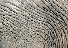 elephant texture by ~3thehardway on deviantART