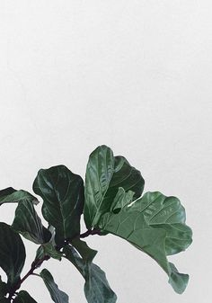 Reform Kitchen / green inspiration / plants / This Pin was discovered by MOON + QUARTZ Leave In, Green Leaves, Plant Leaves, Cactus, Belle Plante, Decoration Plante, Plant Aesthetic, Plants Are Friends, Fiddle Leaf Fig