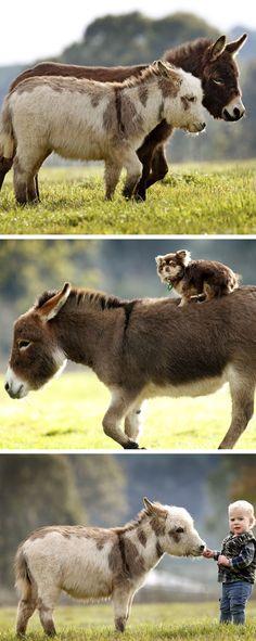 Miniature donkeys!!!
