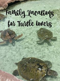 Our family loves to explore nature when on vacation and turtles are one of our favorite animals. We have been to some great spots to see, learn, and touch turtles. Check out our favorite vacation spots for turtle lovers located in the Carribean, Mexico, t Vacations In The Us, Dream Vacations, Family Vacations, Beach Vacations, Caribbean Vacations, Travel With Kids, Family Travel, Big Family, Luxury Beach Resorts