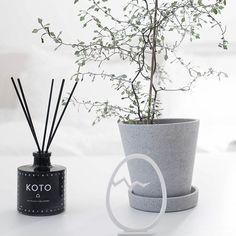 C o r o K i a * my favourite plant