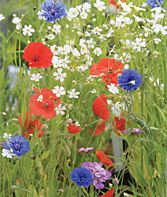 Recommended flowers for guerrilla gardens:  Annual flowers — zinnias, cosmos, sunflowers, poppy, and larkspur — will come up and bloom in a rugged spot without attention.   Perennials: coneflowers (echinacea), bee balm, and black-eyed Susans tolerate drought and neglect, bloom for weeks, and provide seeds for birds and nectar for butterflies.