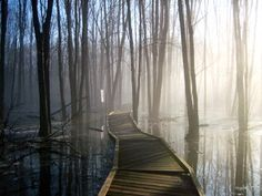 in reality, boardwalks through swamps give me the heebeegeebees