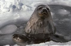 34 Best Animal and Plants that live in the Arctic ...
