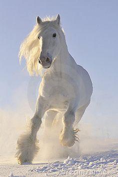 White horse run gallop in winter by Viktoria Makarova, via Dreamstime