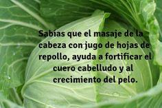 Beneficios del Repollo - Presentado Por Verduras a Domicilio - MASAJE | Flickr - Photo Sharing!