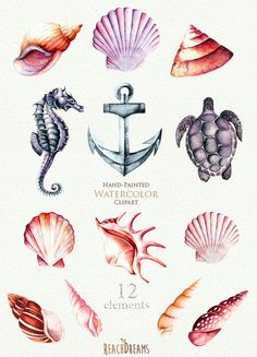 Nautical Watercolor Clipart. Seashells, Seahorse, Sea Turtle, Anchor.  Ocean. Individual PNG Files. Hand Painted Elements. Invitation, DIY
