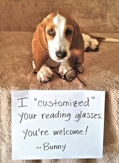 """I """"customized"""" your reading glasses. You're welcome! - Bunny"""
