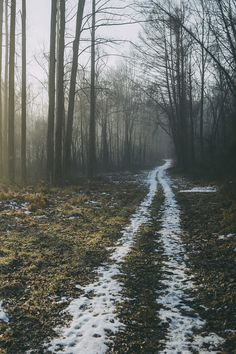 forest road + melting snow | nature photography #adventure