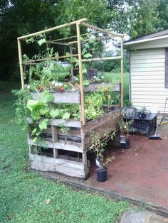 Starter plant table made of reused pallets and pvc piping if needed for climbers.