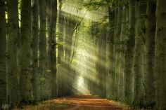 """Rays of Autumn - Rays of Autumn, Lochem, the Netherlands. Thanks for your support and have a nice weekend!!! <a href=""""http://facebook.com/martinpodtphotography"""">Facebook</a>   <a href=""""https://www.instagram.com/martinpodt/"""">Instagram</a>   <a href=""""http://fineartamerica.com/profiles/martin-podt.html"""">Fine Art America</a>"""
