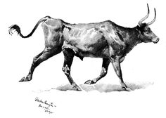 Mexican Steer by Remington