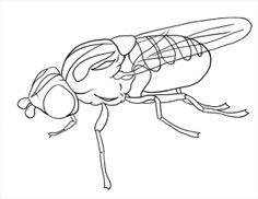 how to draw flies step 19