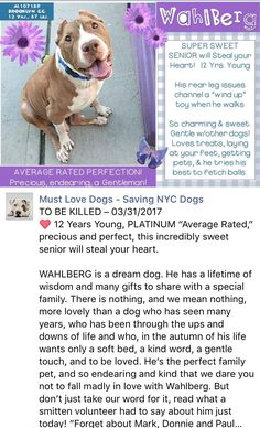 ❤️❤️❤️ HAPPYTEARS ❤️❤️ I'M SO HAPPY FOR YOU PRECIOUS❤️ SAFE❤️ 3/31/17 BY FOR THE LOVE OF DOG-ROTTWEILER RESCUE OF NEW HAMPSHIRE❤️THANK YOU❤️ /ij🐾🐾 3/31/17 WHY MURDER 12 YEAR YOUNG WAHLBERG? HE´S GEORGEOUS AND HEALTHY! PLEASE COME FOR HIM AND SHOW HIM WE ALL CARE AND LOVE HIM! /IJ Brooklyn Center My name is WAHLBERG. My Animal ID # is A1107189. I am a male tan and white pit bull mix. The shelter thinks I am about 12 YEARS old. I came in the shelter as a STRAY on 03/27/2017 from NY 11221…