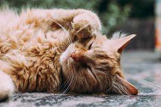 Joskus parasta on vain hengittää ja rentoutua. Ja tietää, että tämäkin menee ohitse. Cat Images Hd, Pictures Images, Free Images, Meds For Dogs, Son Chat, Owning A Cat, Siberian Cat, Cat Colors, Cat Wallpaper