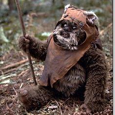 Ewok. I loved the Ewoks! Had their spin off movies! So cute.