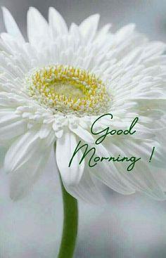 Good Morning Rainy Day, Good Morning Nature, Good Morning Wednesday, Good Morning Texts, Good Morning Sunshine, Good Morning Flowers, Good Morning Greetings, Good Morning Good Night, Good Morning Friends Images