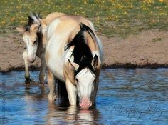 Gorgeous paint mare and foal