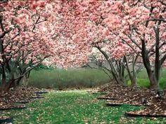 Antonio Vivaldi: La Primavera - YouTube