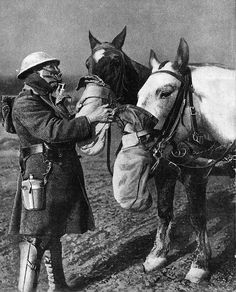 WW1 - War Horses in Gas Masks 1918, how nice of them to remember their horses:)