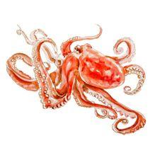 Octopus Original Watercolor painting fine art artwork wall home decor ocean sea animal illustration 13x19 via Etsy