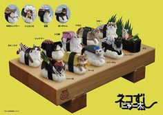 Cats Dressed To Look Like Sushi
