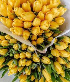 Purple Flower Bouquet, Tulip Bouquet, Beautiful Bouquet Of Flowers, Dark Flowers, Happy Flowers, Romantic Flowers, Simple Flowers, Tulips Flowers, Beautiful Flowers