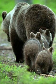 follow mom