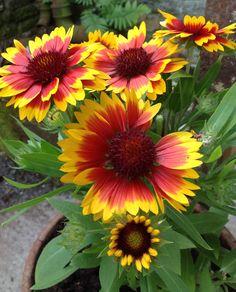 Flower Garden Ideas Colorado the 20 best xeriscape plants for colorado. hmmm, colorado, utah